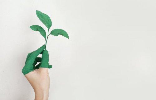 Ideen für einen grünen Liberalismus